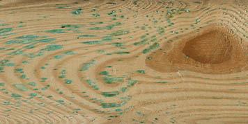 Holz durch das kupferhaltige Konservierungsmittel grün gefärbt
